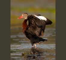Black-bellied Whistling Duck Stretching Unisex T-Shirt