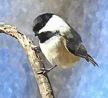 Watercolor Chickadee on Branch - Bird - Nature Art - Chickadee Watercolor Art - Aviary Design by traciv