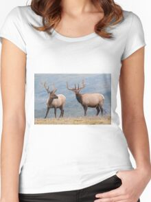 Elk in Rocky Mountain National Park Women's Fitted Scoop T-Shirt