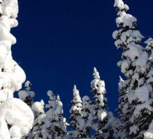 Snowy Trees  Sticker
