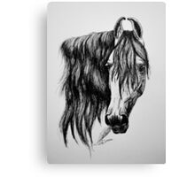 """Beauty in Ink"" - Kathiawari mare Canvas Print"