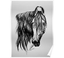 """Beauty in Ink"" - Kathiawari mare Poster"