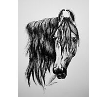 """Beauty in Ink"" - Kathiawari mare Photographic Print"