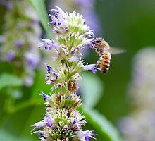 Bee on Blue Flowers 1 by ReidSmith