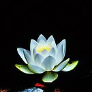 Water Lily by Bob Wall