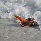 Conch in Gulf by Karen Checca