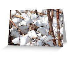 Song sparrow in the snowy bushes Greeting Card