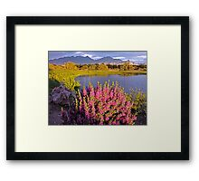 When the Rains Come in the Desert so do the Blooms Framed Print