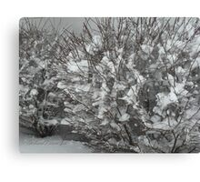 Winter Bush Canvas Print