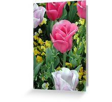 Pink and White Tulips Greeting Card
