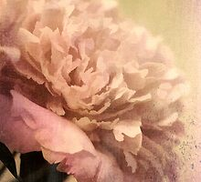 Peonies III by Wendi Donaldson Laird