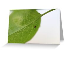 Macro Bug on a Leaf Greeting Card
