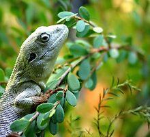 Climbing Lizard by eidann