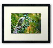 Climbing Lizard Framed Print