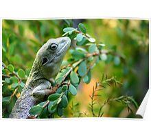 Climbing Lizard Poster