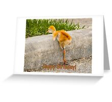 Happy Birthday! I know i can. I know i can. Greeting Card