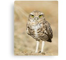 Baby Burrowing Owl-I need my space Canvas Print