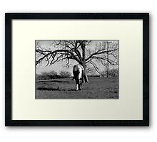 HORSE AND TREE (BLACK AND WHITE) Framed Print