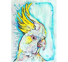 Blue Cockatoo Photographic Print