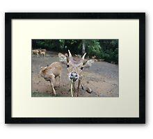 Cute Deer - Eating Vegetables Framed Print