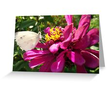 Insect Supper Greeting Card