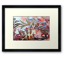 The Branches Of A Mountain Ash Framed Print