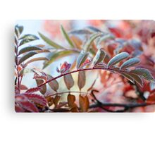 The Branches Of A Mountain Ash Canvas Print