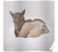 Banff Baby Poster