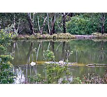 Peaceful Lake in the Bush Photographic Print