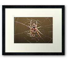 Taxispinne Framed Print