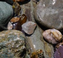 Rock pool treasure Sticker