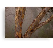 Grace - Blackheath NSW  The HDR Experience Canvas Print