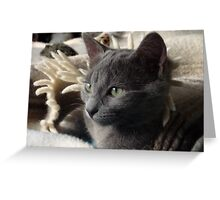 Grey Kitty Greeting Card