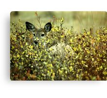 Deer in brush Canvas Print