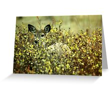 Deer in brush Greeting Card