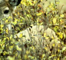 Deer in brush Sticker