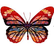Butterfly Abstract Psychedelic Photographic Print