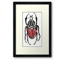 Cool Pretty Cute Bug Beetle Insect Illustration Drawing  Framed Print