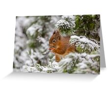 Red squirrel in Winter snow Greeting Card