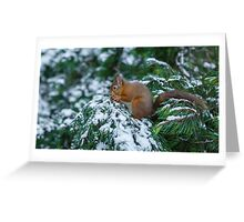 Red squirrel in snow covered pine tree Greeting Card