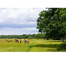 Ponies and Trees Photographic Print