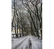 Winter Avenue Photographic Print