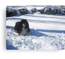 Eager for Snowballs Canvas Print