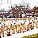 INDIANA CORN FIELDS IN WINTER by Pauline Evans