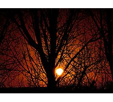 Orange and Black tree sunset Photographic Print