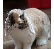 Happy Rabbit Photographic Print