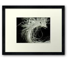 Feather Close Up Framed Print