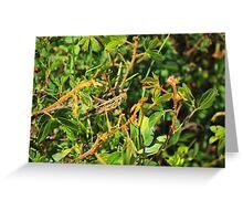 Grasshopper on a Plant Greeting Card
