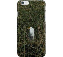 Snowy Egret in Reeds iPhone Case/Skin