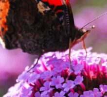 Red Admiral Sticker